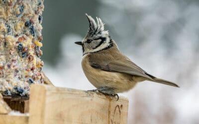 Vögel füttern – So geht's richtig: Tipps und Wissenswertes