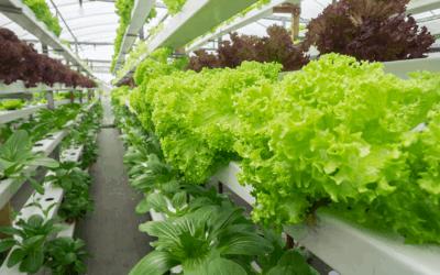 Vertical Farming – Was steckt dahinter